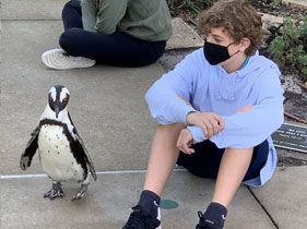 Penguins and students